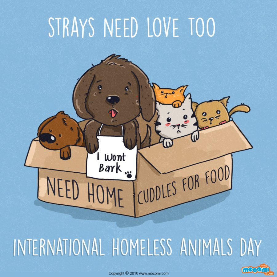 Illustration of homeless stray animals - dogs, cats, puppies etc. to raise awareness for Internation Homeless Animals Day. Commissioned by Mocomi for their facebook page.